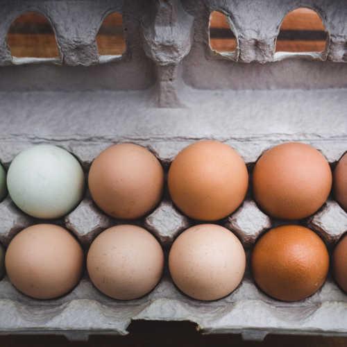 Uova con guscio